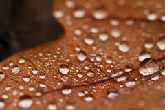Fallen leaves covered with raindrops Stock Photo