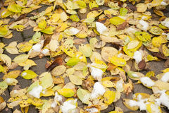 Fallen leaves covered with snow lying on the ground Royalty Free Stock Photos