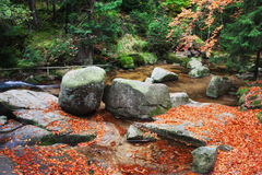 Fallen Leaves at Creek in Autumn Forest Stock Images