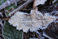 Fallen leaves in crystals of frost on frozen ground. Winter forest. Plants in ice. Winter nature close up Stock Images