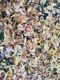 Autumn. Fallen leaves of different shades stock photos