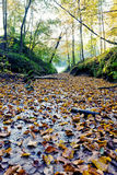 Fallen leaves. On dirt in Lithuania royalty free stock image