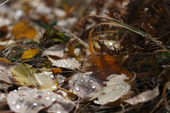 The fallen leaves. Stock Images