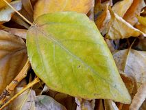 Fallen leaves Royalty Free Stock Photography