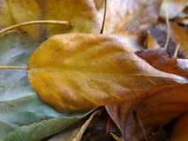 Fallen leaves Stock Image