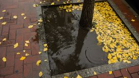 Fallen leaves. In early autumn, a light rain is coming, with some fallen leaves Stock Images