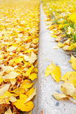 Fallen Leaves on the edge of a street Royalty Free Stock Photo
