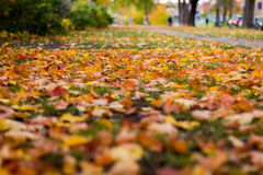 Fallen leaves during the Fall. Fall-colored leaves on the grass with strong bokeh stock image