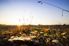 Fallen Leaves In A Field