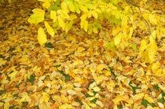 Fallen leaves on the floor Stock Image