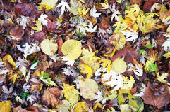 Fallen leaves on the floor Stock Photo