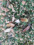 Leaves. Fallen leaves and flower in autumn day royalty free stock photo