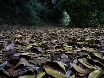 Fallen leaves on forest floor stock photos