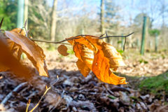 Fallen leaves on forest floor Royalty Free Stock Image