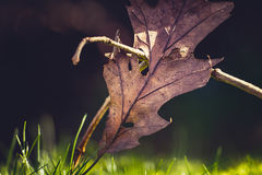 Fallen leaves on forest floor Stock Photography