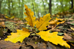 Fallen leaves on a forest path at autumn Stock Photography