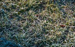Fallen leaves on a frosted grass. Lovely nature background. view from above Royalty Free Stock Images