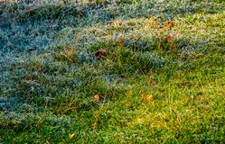Fallen leaves on a frosted grass. Lovely nature background Stock Photo