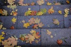 Fallen leaves on granite steps Stock Image