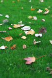 Fallen Leaves on Grass Stock Photos