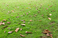 Fallen leaves on the grass Stock Photography