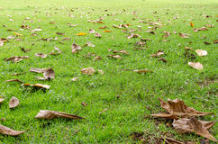 Fallen leaves on the grass meadow background Stock Photos