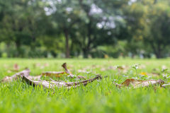 Fallen leaves on the grass meadow background Royalty Free Stock Photos