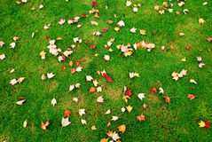 Fallen leaves on the green grass Stock Photography