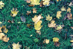 Fallen leaves on green grass Royalty Free Stock Photos