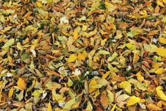 Fallen leaves on green grass Royalty Free Stock Photography
