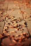 Fallen leaves on the ground. Autumn leaves fallen on the ground stock photography