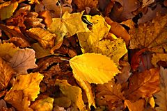 Fallen leaves Stock Photos