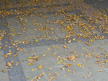 Fallen leaves on the ground Royalty Free Stock Photos