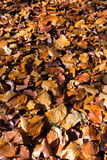 Fallen leaves on the ground Stock Photos