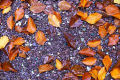 Fallen leaves on the ground. Closeup of fallen leaves on the ground in the autumn Stock Image