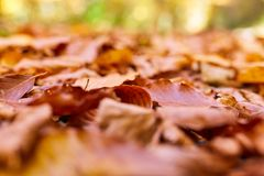 Fallen leaves on the ground. Closeup of fallen leaves on the ground in the autumn Royalty Free Stock Photo