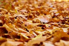 Fallen leaves on the ground. Closeup of fallen leaves on the ground in the autumn Stock Photography