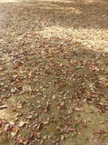 The fallen leaves. The ground is full of dead leaves Stock Photo