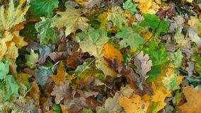 Fallen leaves on ground stock footage