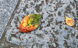 Fallen leaves on the ground Stock Photo