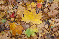 Fallen leaves on the ground in the park Stock Images