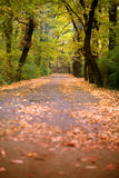 Fallen leaves on the ground with trees. Fallen autumn leaves on the ground with trees around stock image