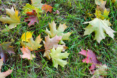 Fallen leaves on ground, view above Stock Photo