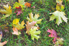 Fallen leaves on ground, view above Stock Photography