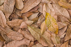 The fallen leaves Stock Photography