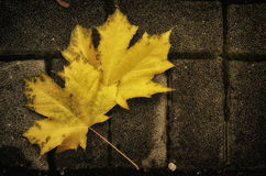 Fallen leaves on the ground Royalty Free Stock Photo