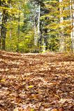 Fallen leaves on a Hike Stock Photos
