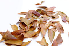 Fallen leaves isolated Royalty Free Stock Photos
