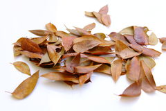 fallen leaves isolated stock photo