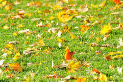 Fallen leaves on the lawn Royalty Free Stock Photography